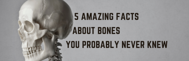 5 Amazing Facts About Bones You Probably Never Knew