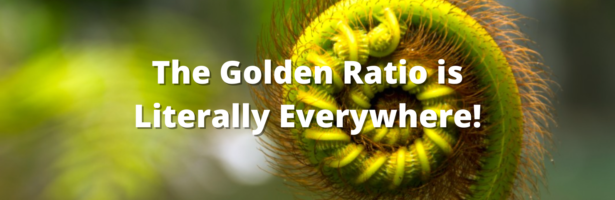 The Golden Ratio is Literally Everywhere!